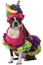 My Singing Monsters Halloween Costumes 34 Best Dog Costumes Images On Pinterest Animal Costumes