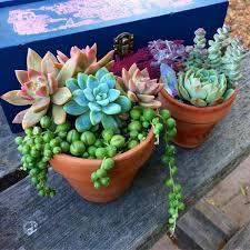 home depot palm springs black friday ad best 25 desert rose ideas on pinterest desert rose plant