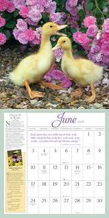 native plants for birds amazon com audubon birds in the garden wall calendar 2018