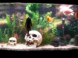 decoracion de acuarios buscar con acuarios