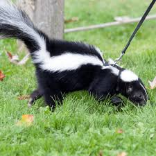 How Do You Get Rid Of Skunks In Your Backyard How To Get Rid Of Trash Can Smell U2013 How To Get Rid Of Stuff