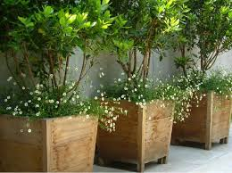 Potted Plants For Patio More Privacy For Your Deck Or Patio Amazing Deck