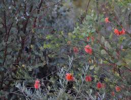 victorian native plants 5 houseplants that changed history gardenista