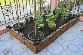 Urban Veggie Garden - starting an urban vegetable garden video and photos