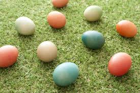free stock photo 13481 easter egg hunt freeimageslive