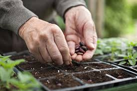 starting a vegetable garden from seeds or seedlings