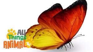 butterflies animals for children kids videos kindergarten