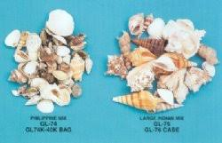 assorted seashells wholesale assorted seashells in bulk for crafts by kilo gallon