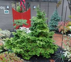 evergreen plants for northwest gardens the garden hotline