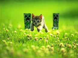 funny cat running 24 high resolution wallpaper funnypicture org