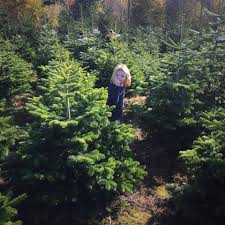 badger hill christmas tree farm home facebook