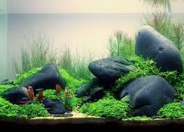 Takashi Amano Aquascaping Techniques 418 Best аквариумы Images On Pinterest Aquascaping Aquarium