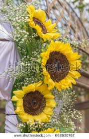 Sunflower Wedding Decorations Tied Arch Stock Images Royalty Free Images U0026 Vectors Shutterstock
