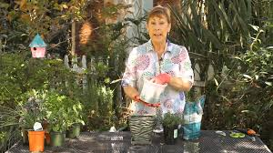 how to care for herb pots indoors garden space youtube
