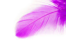 purple feather purple feather stock photography image 645252