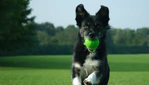 different types of dog training