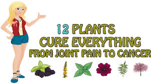 native american plants used for medicine 12 plants native americans used to cure everything from joint