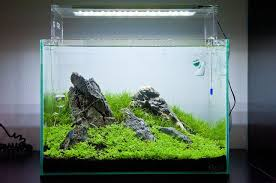 Takashi Amano Aquascaping Techniques Amano Ada Style Nature Aquarium Aquariums And Natural Habitats