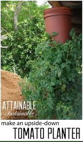 Growing Your Own Vegetable Garden by Upside Down Tomatoes Vegetable Garden Planters And Gardens