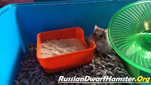 How Much Is A Hamster Cage How To Create A Sand Bath For Dwarf Hamsters 5 Steps