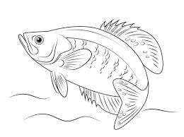 white crappie coloring free printable coloring pages
