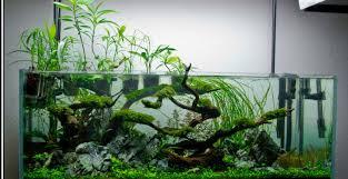 vasche acquario acquario aperto o chiuso l acquario di valerio rizzo