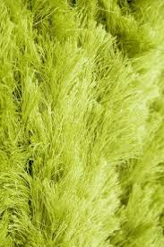 Bright Green Area Rugs 26 Best Lime Green Area Rug Images On Pinterest Area Rugs Limes