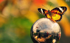 beautiful butterfly wallpapers group 74