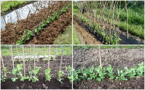 our plot at green lane allotments getting the support right