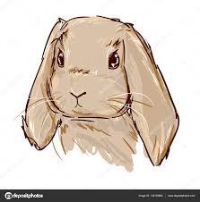 hand drawn cute bunny u2014 stock vector alsoush 135152954