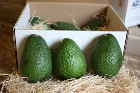 fruit by mail avocados by mail california avocados direct delivers kitchn