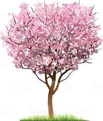 cherry blossom tree stock vector art 594076914 istock