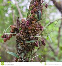 Orchid Bark Orchid On Bark Stock Photo Image 50818990