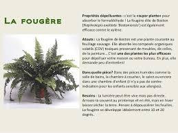 plantes d駱olluantes chambre intérêt plantes depolluantes chambre à coucher photos de plantes