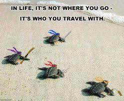 Tmnt Memes - tmnt turtles animals know your meme