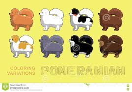 dog pomeranian coloring variations vector illustration stock