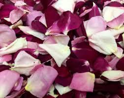 flower petals flower petals etsy