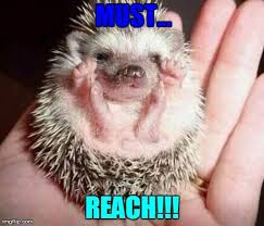 Hedgehog Meme - 11 best cute meme animals images on pinterest funny pics funny