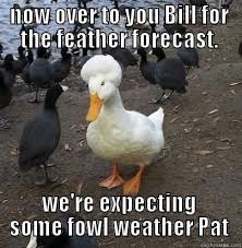 Duck Meme - 35 duck memes that will make you quack all day i can has cheezburger