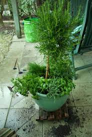 Herb Garden Planter Ideas by The 25 Best Small Herb Gardens Ideas On Pinterest Indoor Herbs