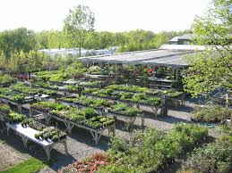 100 flower nurseries near me dropseed native plant nursery