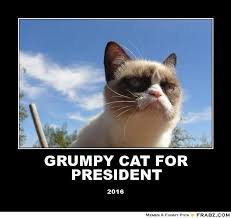 Meme Generator Cat - grumpy cat pictures with captions grumpy cat for president