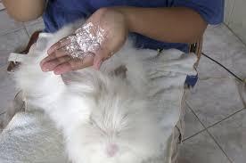 Hair Dryer Khusus Kucing cara memandikan kucing di rumah sendiri binatang peliharaan