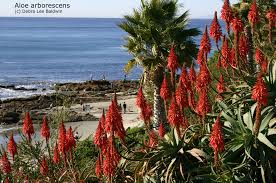 southern california native plants landscaping firewise landscaping with succulents by debra lee baldwin