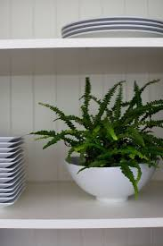 Best Indoor Plants Low Light by 262 Best Ferns U0026 Plants Images On Pinterest Plants Ferns And