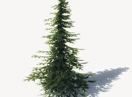 low poly 15 pine tree models for cgtrader
