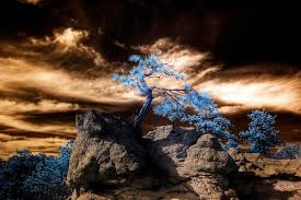photography colorado springs 45 impressive exles of infrared photography inspirationfeed