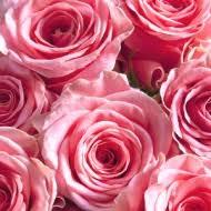 bulk roses bulk roses bulk flowers roses pink roses white roses