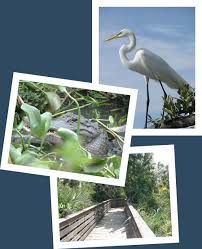 Florida wildlife tours images Florida boat tours boat tour times and locations dolphin boat jpg