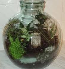 sealed bottle garden growing in wardian cases and bottle gardens